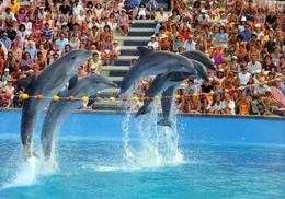 Marineland Catalunya, ES - Dolphin - Espagne
