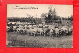 Vire : Elevage à La Ferme De La Sorrière Du Moulin - Vire