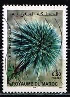 Marokko 2003,Michel# 1423 O Echinops Spinosus - Morocco (1956-...)