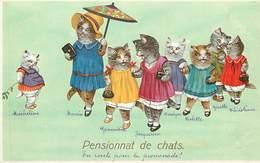 CHATS HABILLES -  Pensionnat De Chats. - Chats