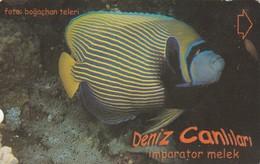 Turkey, TR-TT-N-3423, Imparator Melek, Sea Creatures, Fish, 2 Scans. - Turkey