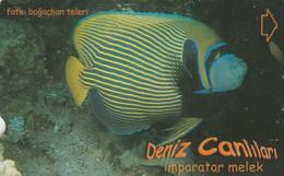 Turkey, TR-TT-N-343A, Imparator Melek, Sea Creatures, Fish, 2 Scans. - Turkey