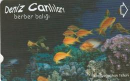 Turkey, TR-TT-N-346, Berber Baligi, Sea Creatures, Fish, 2 Scans. - Turkey