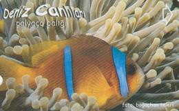 Turkey, TR-TT-N-347, Palyaco Baligi, Sea Creatures, Fish, 2 Scans. - Turkey
