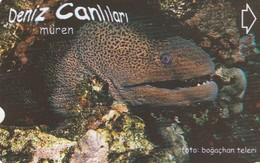 Turkey, TR-TT-N-350, Müren, Sea Creatures, Fish, 2 Scans. - Turkey