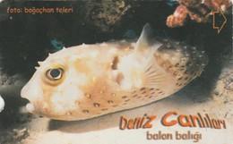 Turkey, TR-TT-N-353, Balon Baligi, Sea Creatures, Fish, 2 Scans. - Turkey