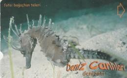 Turkey, TR-TT-N-354, Deniz Atii, Sea Creatures, Sea Horse, 2 Scans. - Turkey