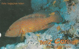 Turkey, TR-TT-N-359, Mercan Orfozu, Sea Creatures, Fish, 2 Scans. - Turkey
