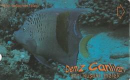 Turkey, TR-TT-N-360, Sari Kusakli Melek, Sea Creatures, Fish, 2 Scans. - Turkey