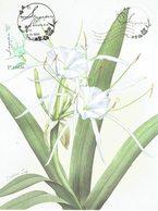 31C: CM,Carte Maximum Card,Singapore Lily Flower  , Maxi Card, MC - Plants