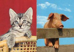 Lot De 25 Cartes Sur Les Animaux - Postkaarten