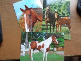 Paard, Cheval, Horse / 6 Kaarten -> Unwritten - Horses