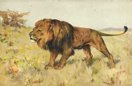 Illustrateur Signé Wardth LION   RV - Lions