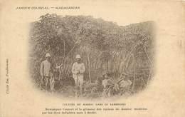 Etrangères - Afrique - Lot N° 471 - Lots En Vrac - Lot Divers D'Afrique - Lot De 241 Cartes - Postkaarten