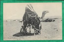 Un Bassour Méhari Dromadaire 2scans 08-10-1912 - Professions