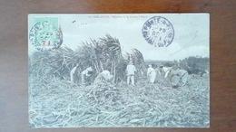 CARTE POSTALE ANCIENNE - GUADELOUPE 971 - RECOLTE DE LA CANNE A SUCRE - ANIMEE - Other