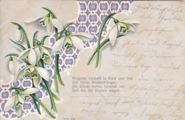 AK Schneeglöckchen Und Gedicht - Künstlerkarte - Kastenstempel Stotzheim 1901 (50307) - Illustrateurs & Photographes