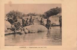 CPA - Zimbabwe - Zambèze Hippopotame Tué Par Litia - Zimbabwe