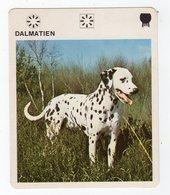 Mai20   88304    Fiche   De Chien   Un Dalmatien - Other
