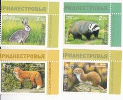 2013 , Transnistria , Natural Reservas, Jagorlyk , Animals , Nature Fauna Animals Fox Hare Badger Weasel Natural Reserve - Moldawien (Moldau)