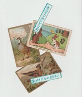 DAV : Vieux Papier :  LOT  Chromos   Chasse , Oiseau , Lapin - Unclassified
