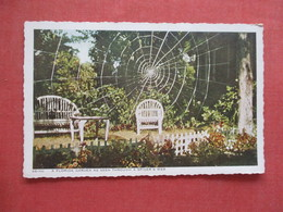 Florida   Garden As Seen Through A  Spider Web   Ref 4090 - Etats-Unis
