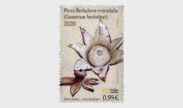 Montenegro - Postfris / MNH - Flora 2020 - Montenegro