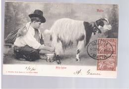 MALTA Milk- Seller 1905 Old Postcard - Malta