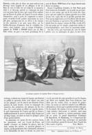 """LES PHOQUES JONGLEURS Du CPT """" WEBB """" à L'OLYMPIA à PARIS  1899 - Technical"""