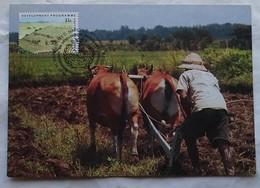 Carte Maximum  Labourage Avec Boeufs - Agriculture