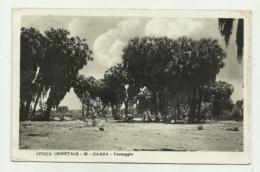 AFRICA ORIENTALE - DAMBA MASSAUA - VIAGGIATA   FP - Eritrea