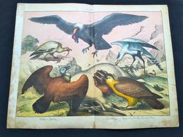Ancienne Lithographie Planche Histoire Naturelle Oiseau Vautour Condor - Prenten & Gravure