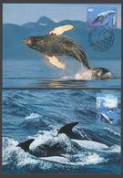 AUSTRALIE AAT 1995 4 MAXICARDS Baleines Et Dauphins - Maximumkarten