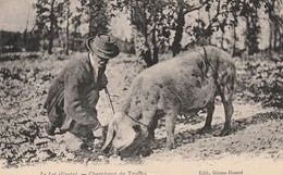 Chercheur De Truffes Timbre 1933 ( Cochon Truie) - Andere Gemeenten