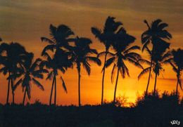 1 AK Reunion * Allée De Cocotiers - Übersee-Departement Von Frankreich - Insel Im Indischen Ozean - IRIS Karte 8794 * - Reunion