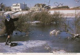Lady Feeding Ducks Swans At Wide Water Lancing Sussex 1980s Postcard - Angleterre