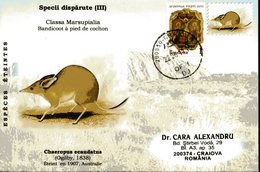 Envelope Speciale, 2011, Roumanie, Especes Eteintes, Chaeropus Ecaudatus, Bandicot A Pied De Cochon - Stamps