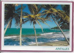 ANTILLES - Antille