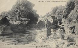 La Vie à La Mer - La Pêche à La Crevette - Fishing
