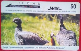 50 Units Chaja , Chauna Torcuata - Uruguay