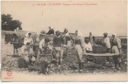 17 ILE De RE - LA FLOTTE  Transport Des Huîtres Au Parc Du Purey - Ile De Ré