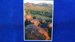 Saguaro National Park Arizona USA - Autres