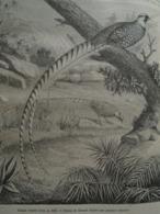 Revered Pheasant  Faisan Vénéré  CHINA Chine Chinese - Engraving 1864 TDM1864.2.328 - Estampas & Grabados