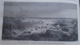 Un Etang Au Desert GOBI -  CHINA Chine Chinese - Engraving 1864 TDM1864.2.332 - Estampas & Grabados
