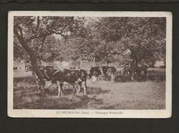 Rare / 27 Le Neubourg / Pâturages Normands ( Pâturage,vaches ) - Le Neubourg