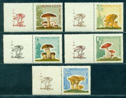 1964 Mushrooms,Pilze,Champignons,Settas,Russia,2983 Y,CV€25/$35,MNH,TAB/2/R - Pilze