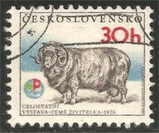AF-6 Ceskoslovenko Mouton Bélier Schapen Pecora Aveja Sheep Ram Schaf Rammen Ariete - Ferme