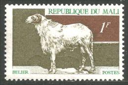 AF-37 Mali Mouton Bélier Schapen Pecora Aveja Sheep Ram Schaf Rammen Ariete - Ferme