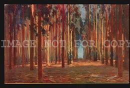 Uruguay Postcard Cpa AK - Piriapolis Eucaliptus Forest Arpi N°16  W6-020 - Uruguay