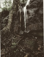 CD)  Guyane Flore  CP Tres Grand Format Chute D'eau En Forêt - Guyane